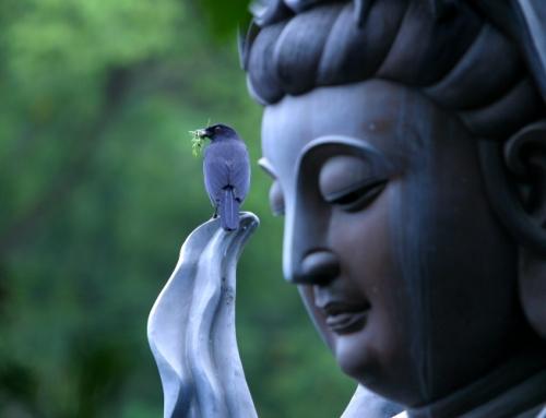 Mindfulness no lo cura todo